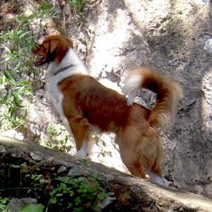 Passitiello - il cane